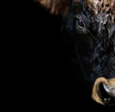 SEB Bull Head Face Black Silver Animal Necklace Icelandic Fashion Jewellery Design Geometric Scandinavian Style Jewelry