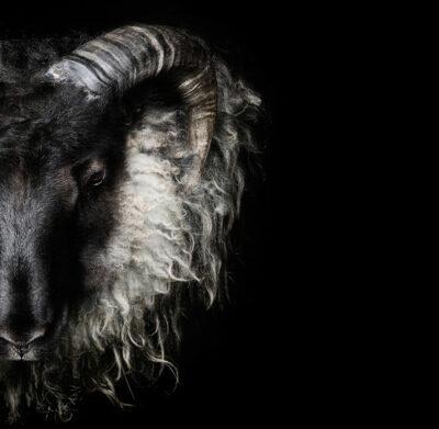 SEB Black Grey Wool Ram Head Face Icelandic Silver Animal Necklace Jewellery Geometric Design Nordic